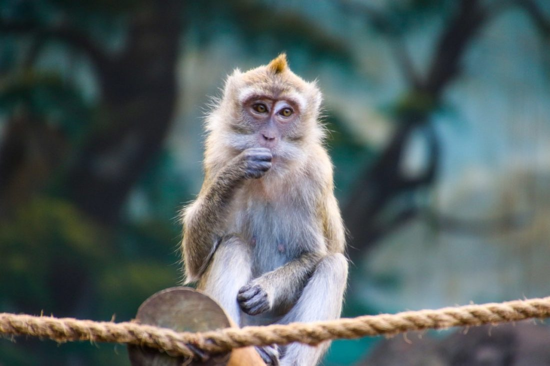 animal-ape-close-up-1201390